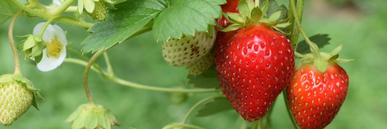 strawberries superfood