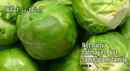 Click to Visit Our Fruit & Veggie Database: Brussels Sprouts