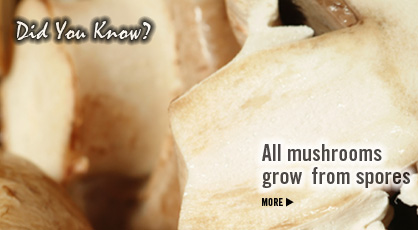 Did you know? All mushrooms grow from spores. Mushrooms Nutrition Information. Fruits And Veggies More Matters.org